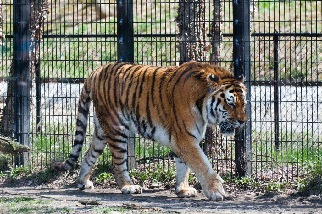 checkMarkphotography_ZOO_05